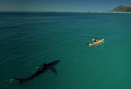 Paddle Faster, South Africa