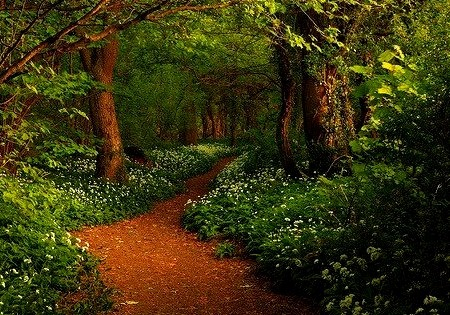 Forest Path, Ransom Woods, Lancashire, England