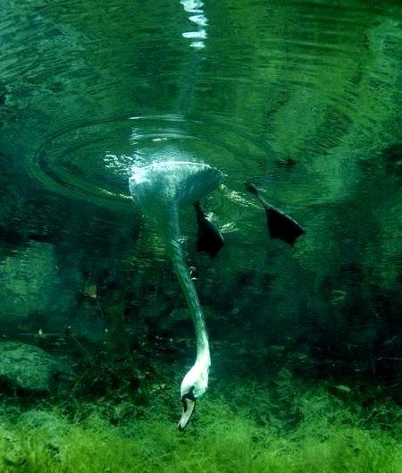 Swan Dive, England