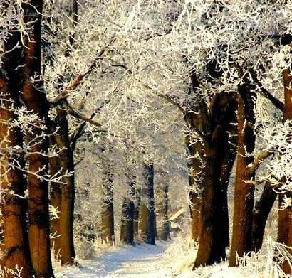 Snow Path, Baden-Wurttenberg, Germany